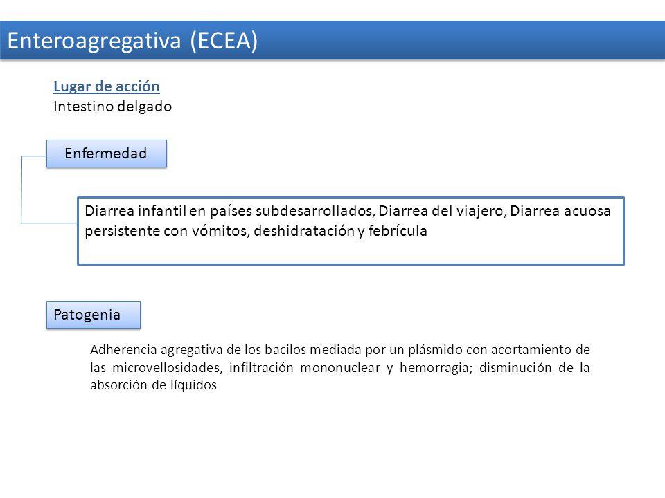 Enteroagregativa (ECEA)