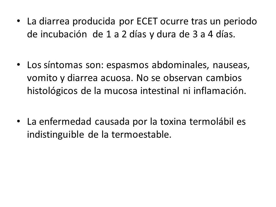 La diarrea producida por ECET ocurre tras un periodo de incubación de 1 a 2 días y dura de 3 a 4 días.