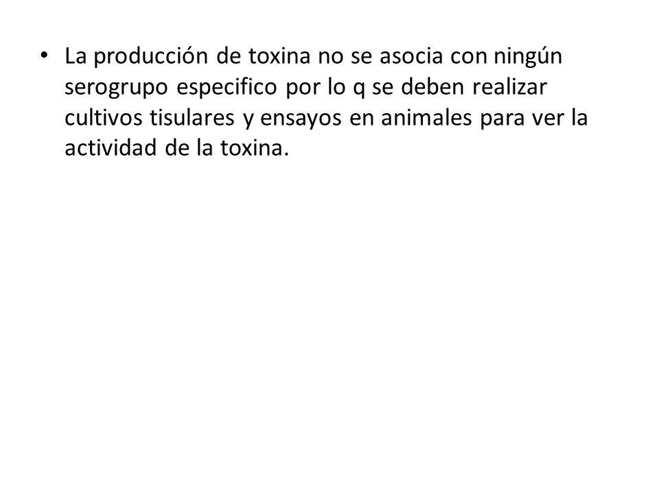 La producción de toxina no se asocia con ningún serogrupo especifico por lo q se deben realizar cultivos tisulares y ensayos en animales para ver la actividad de la toxina.