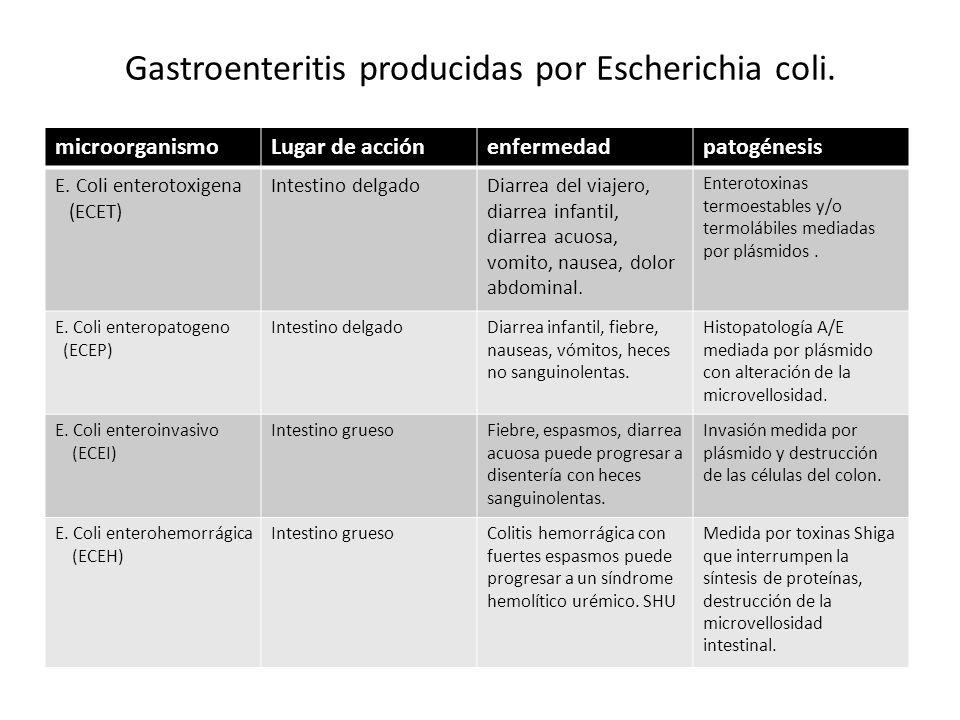 Gastroenteritis producidas por Escherichia coli.