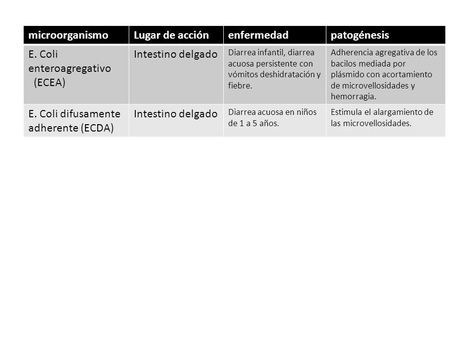 E. Coli enteroagregativo (ECEA) Intestino delgado
