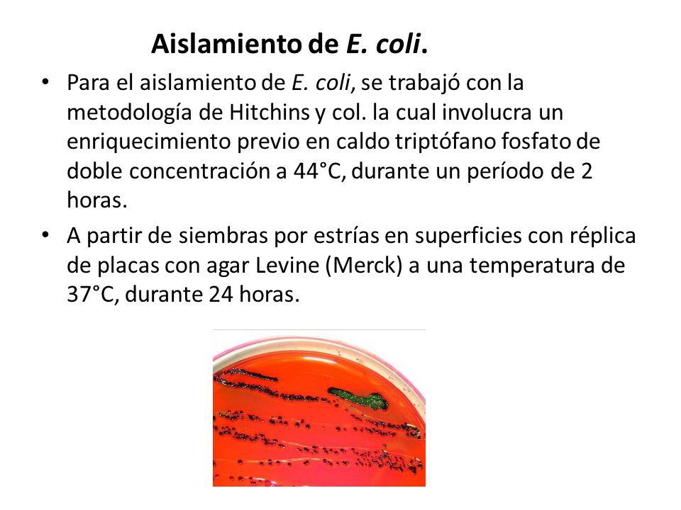 Aislamiento de E. coli.