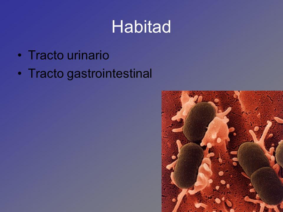 Habitad Tracto urinario Tracto gastrointestinal