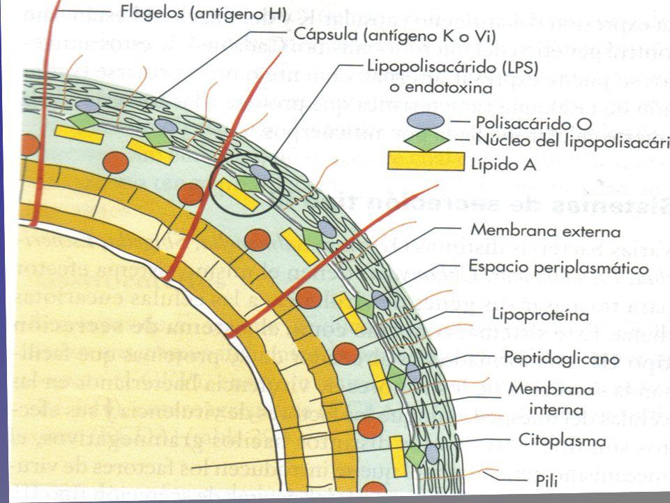 Componentes patógenos