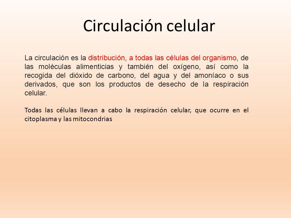 Circulación celular