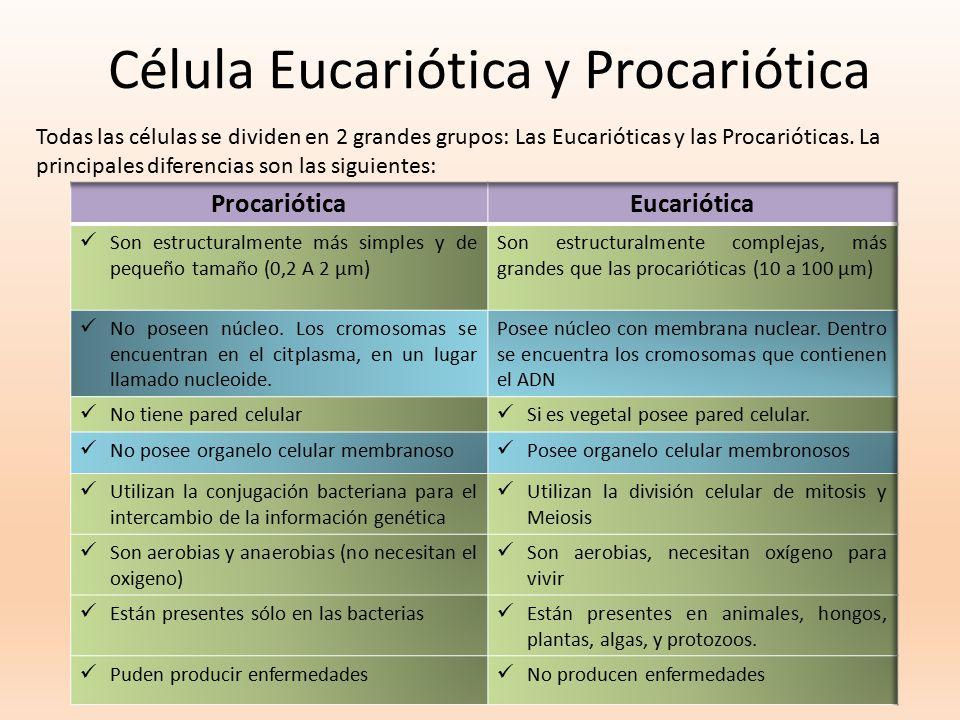 Célula Eucariótica y Procariótica