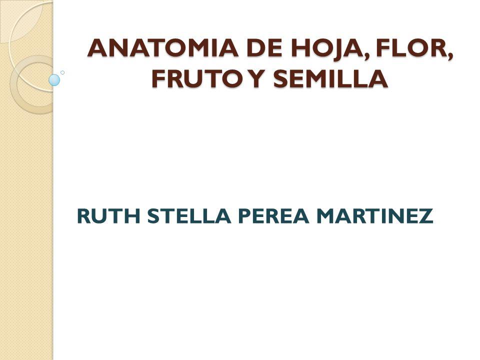 ANATOMIA DE HOJA, FLOR, FRUTO Y SEMILLA - ppt video online descargar