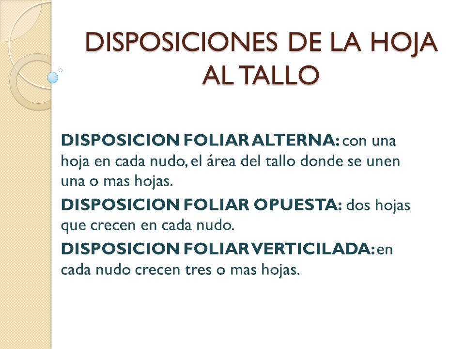 DISPOSICIONES DE LA HOJA AL TALLO