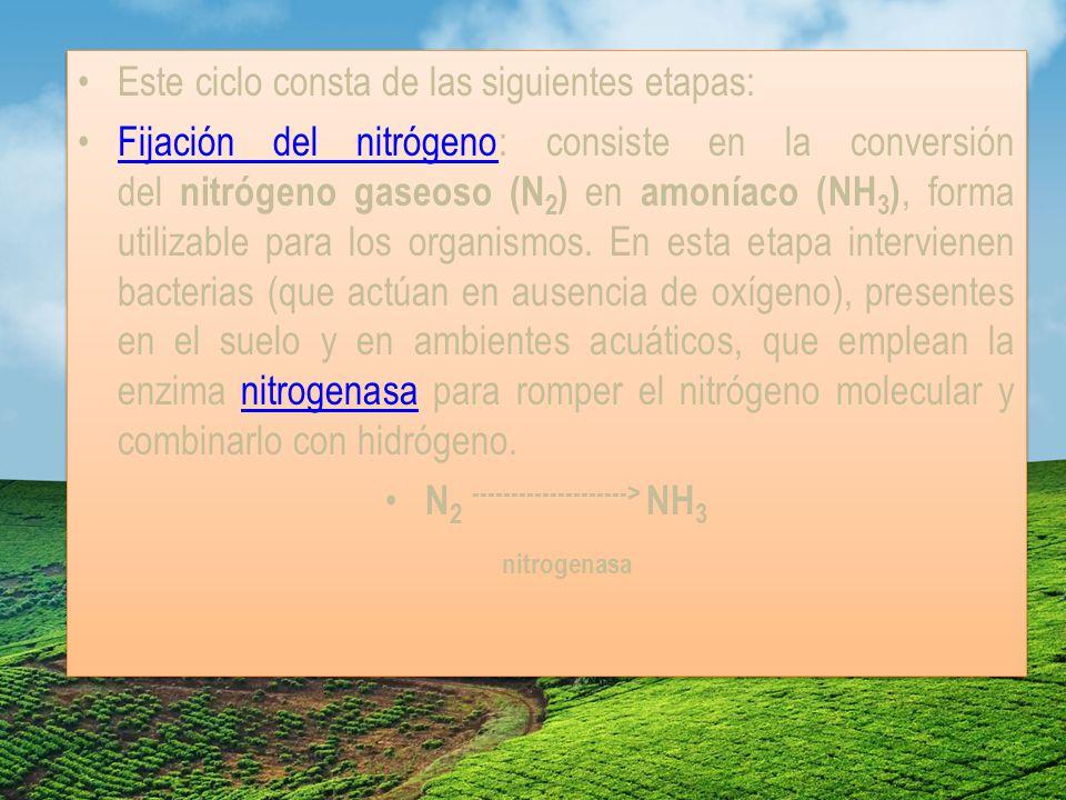 N2 --------------------> NH3 nitrogenasa