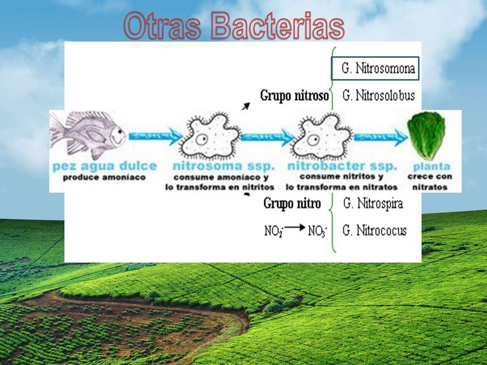 Otras Bacterias