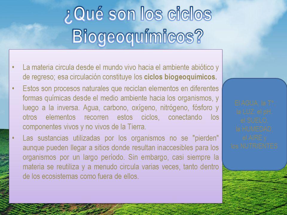 ¿Qué son los ciclos Biogeoquímicos