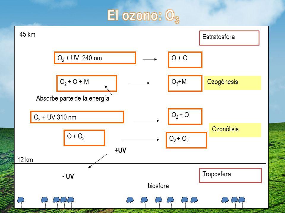 El ozono: O3 45 km Estratosfera O2 + UV 240 nm O + O O2 + O + M O3+M