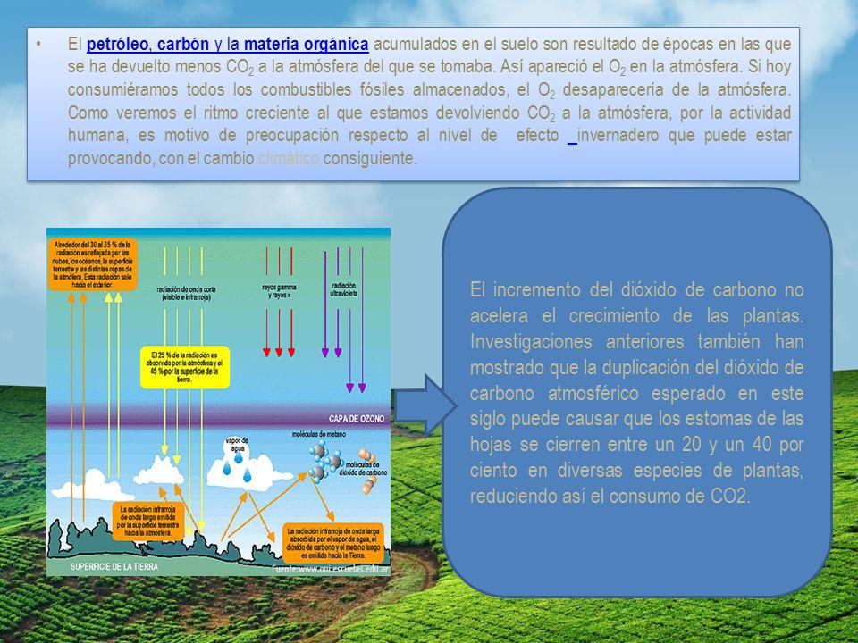 El petróleo, carbón y la materia orgánica acumulados en el suelo son resultado de épocas en las que se ha devuelto menos CO2 a la atmósfera del que se tomaba. Así apareció el O2 en la atmósfera. Si hoy consumiéramos todos los combustibles fósiles almacenados, el O2 desaparecería de la atmósfera. Como veremos el ritmo creciente al que estamos devolviendo CO2 a la atmósfera, por la actividad humana, es motivo de preocupación respecto al nivel de efecto invernadero que puede estar provocando, con el cambio climático consiguiente.