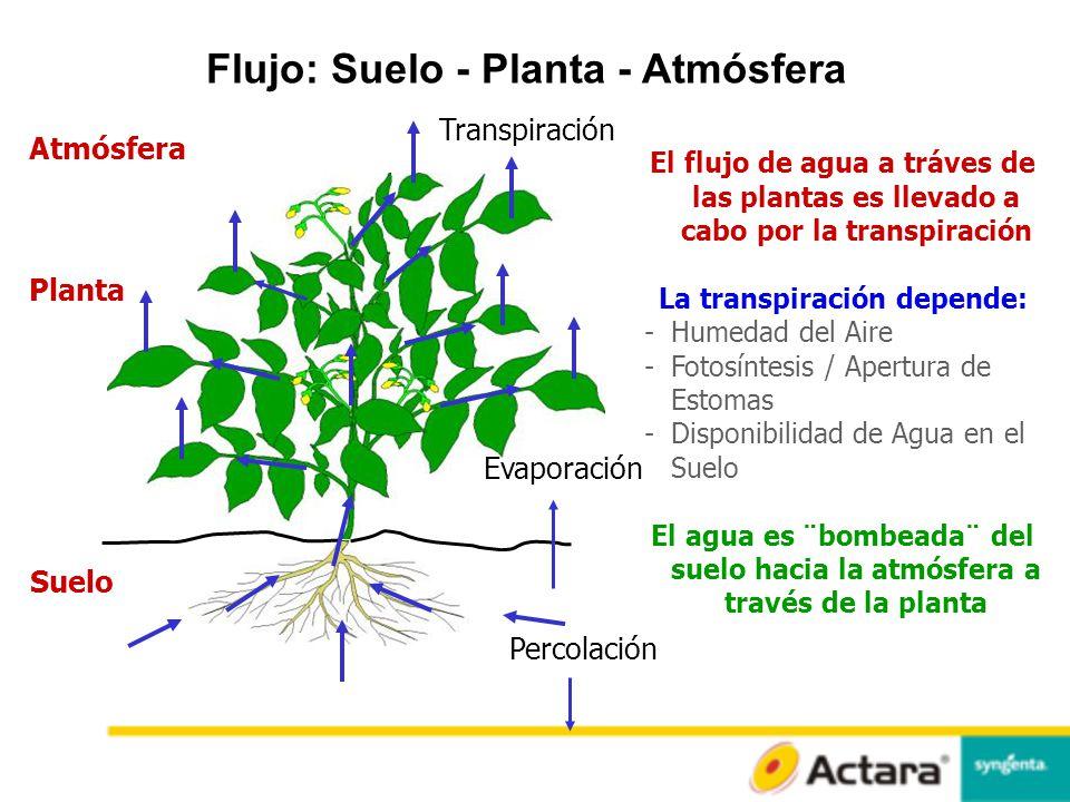 Flujo: Suelo - Planta - Atmósfera La transpiración depende: