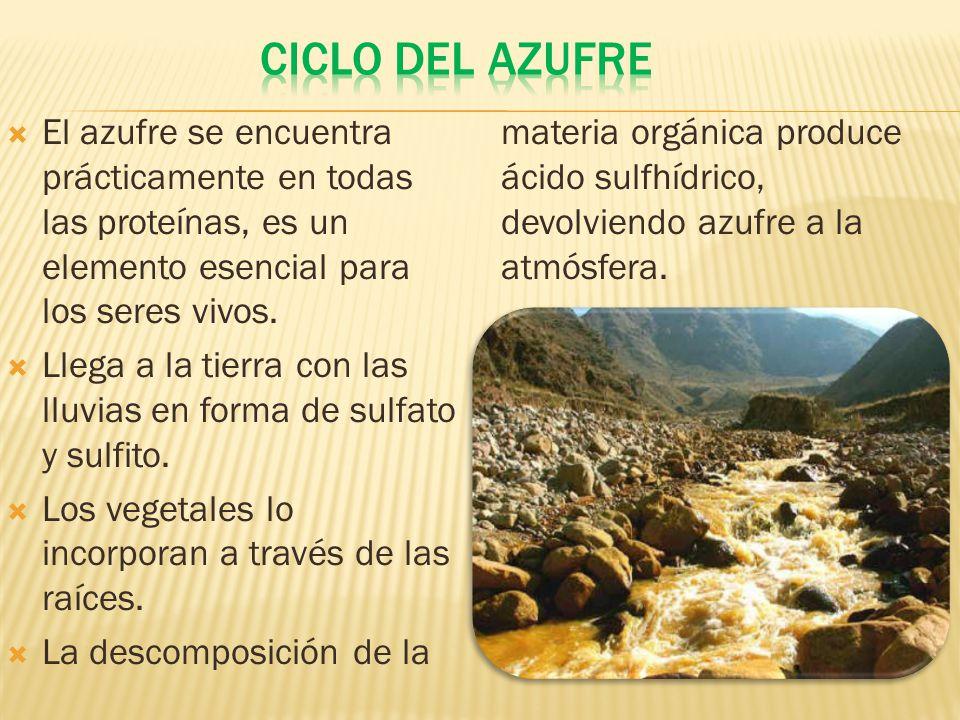 Ciclo del azufre El azufre se encuentra prácticamente en todas las proteínas, es un elemento esencial para los seres vivos.