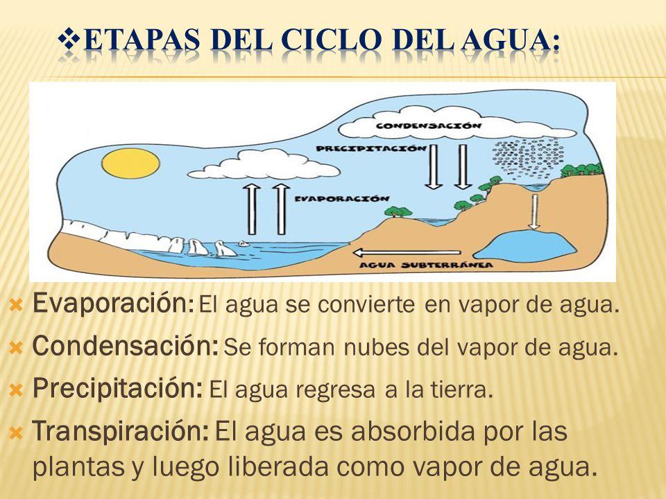 Etapas del ciclo del agua:
