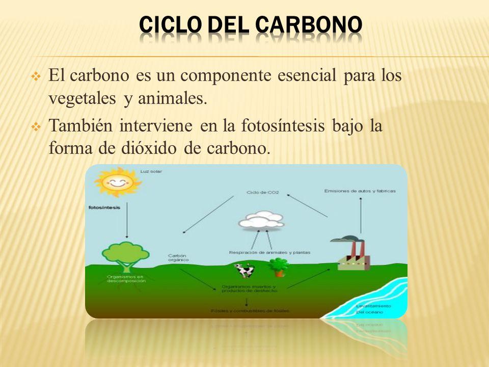 Ciclo del carbono El carbono es un componente esencial para los vegetales y animales.