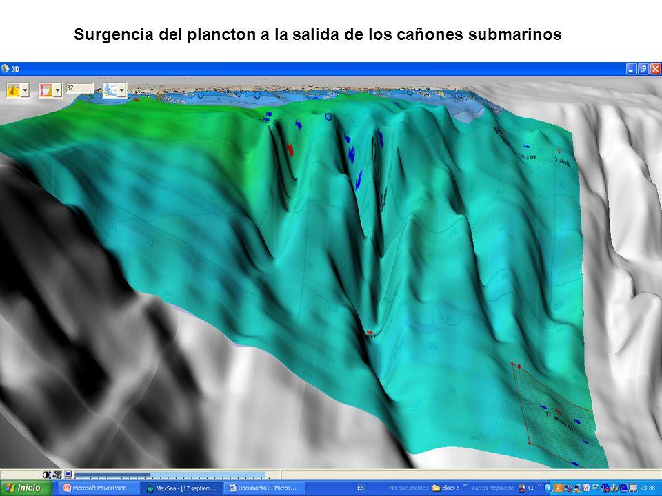 Surgencia del plancton a la salida de los cañones submarinos