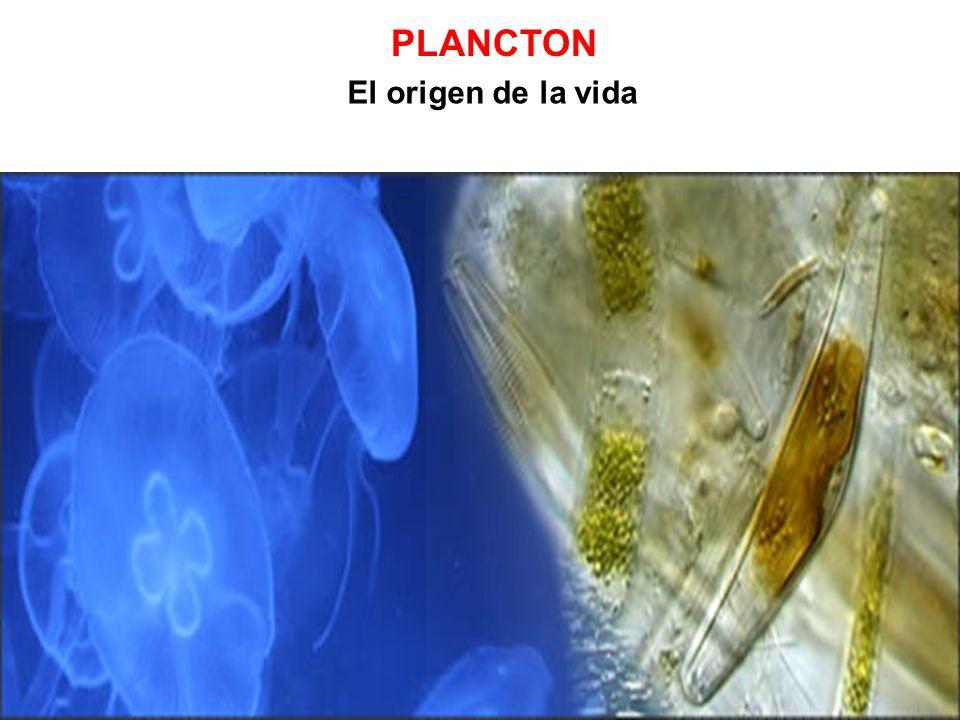 PLANCTON El origen de la vida