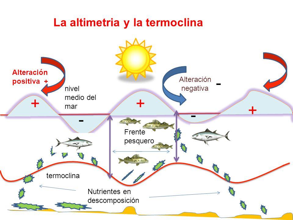 - + + + - - La altimetria y la termoclina Alteración positiva +