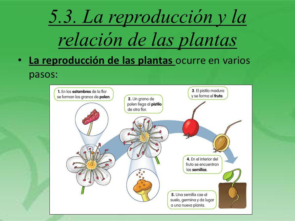 5.3. La reproducción y la relación de las plantas
