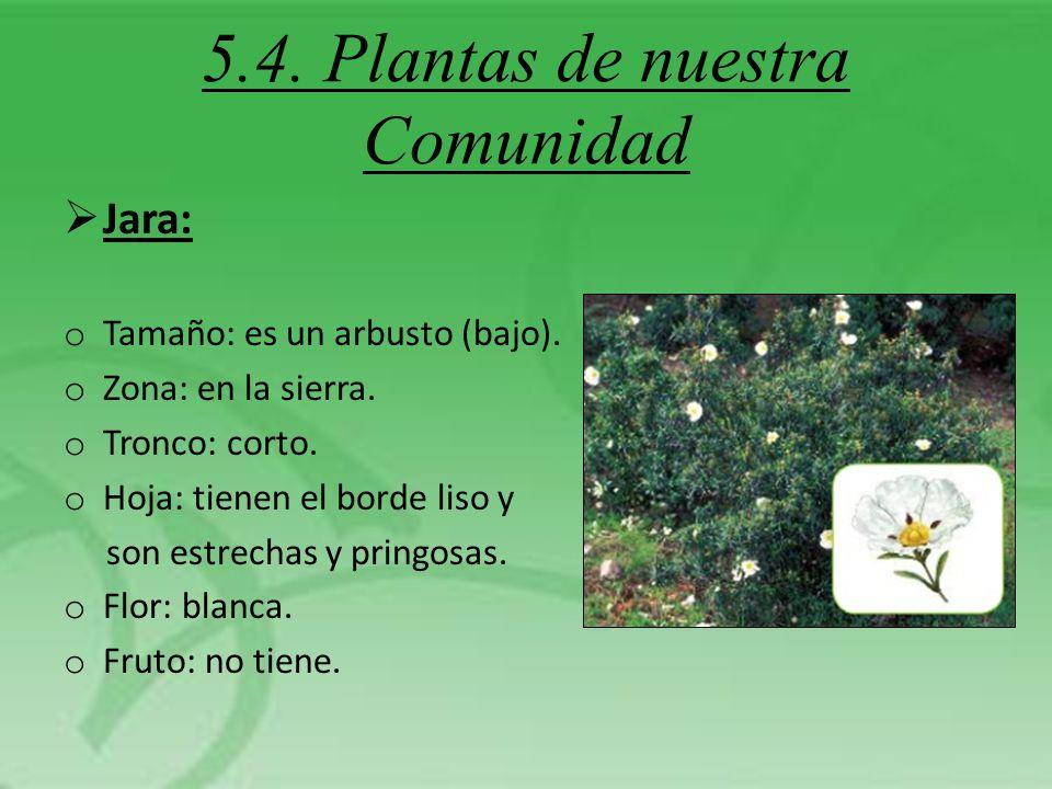 5.4. Plantas de nuestra Comunidad