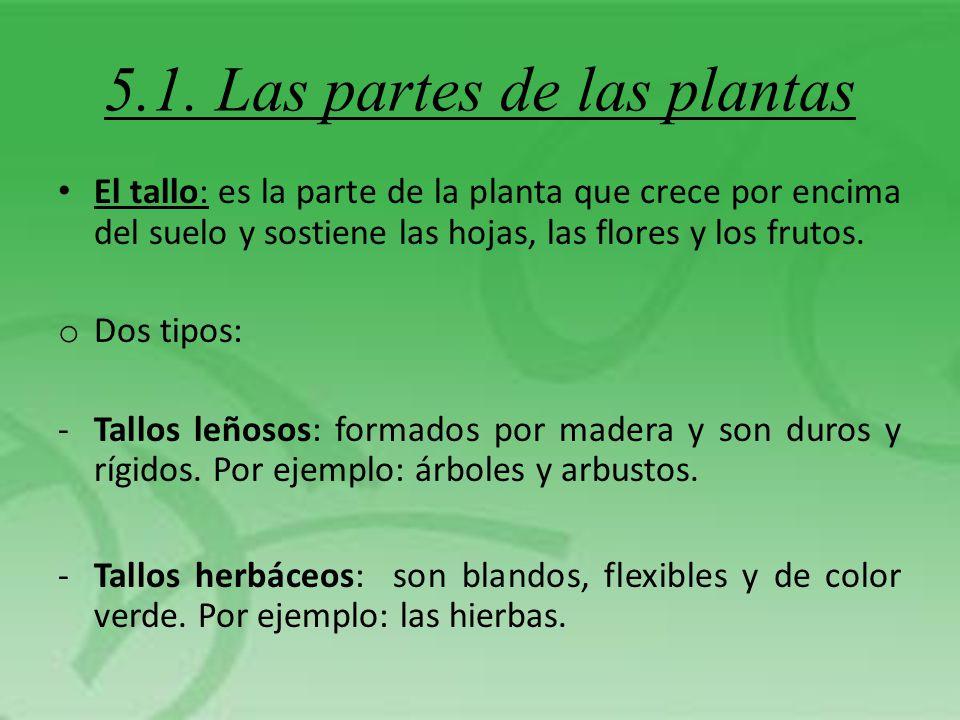 5.1. Las partes de las plantas