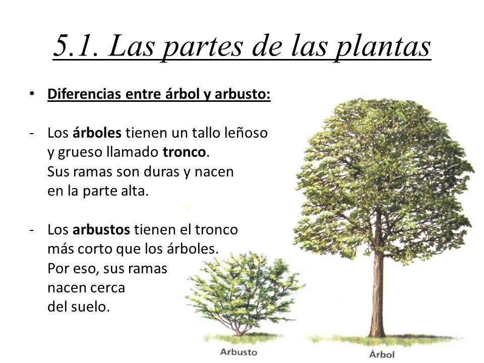 Tema 5 las plantas ppt video online descargar for Cuales son las partes de un arbol