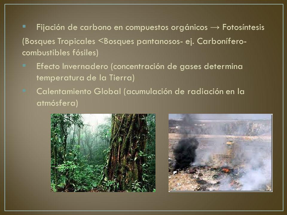 Fijación de carbono en compuestos orgánicos → Fotosíntesis