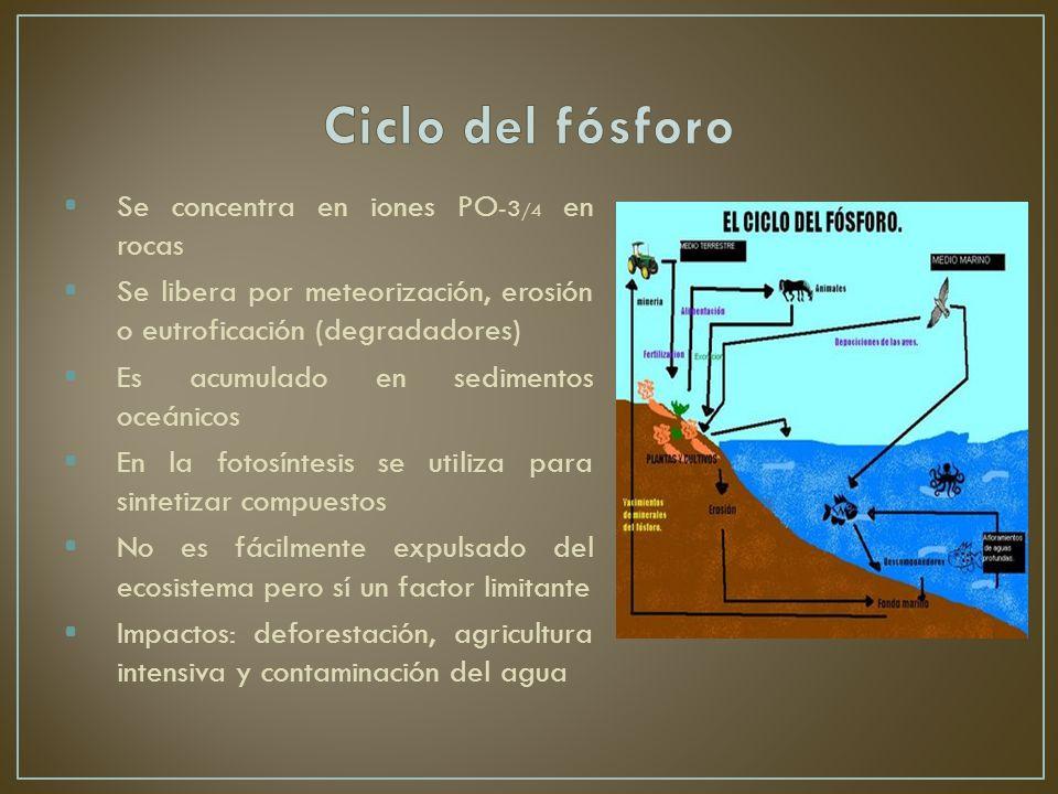 Ciclo del fósforo Se concentra en iones PO-3/4 en rocas