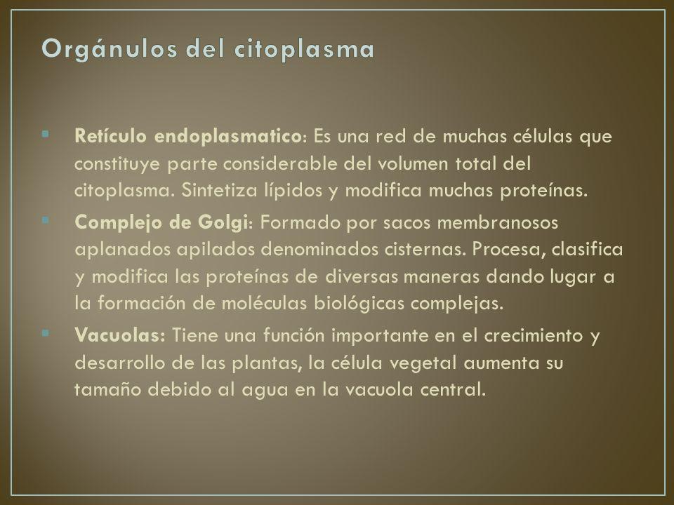 Orgánulos del citoplasma