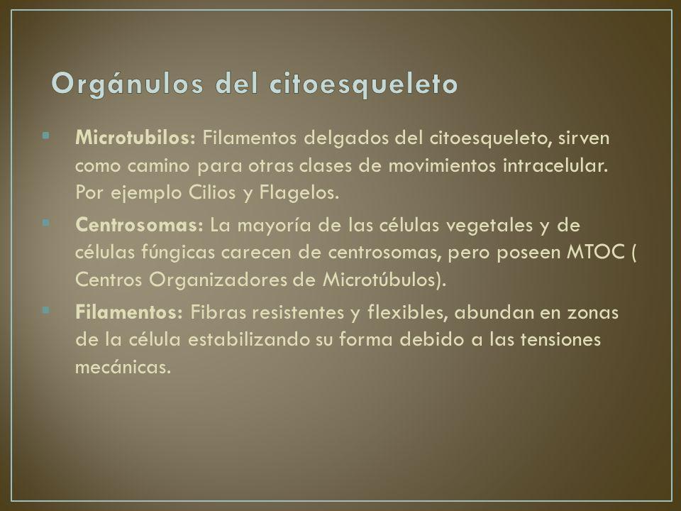 Orgánulos del citoesqueleto