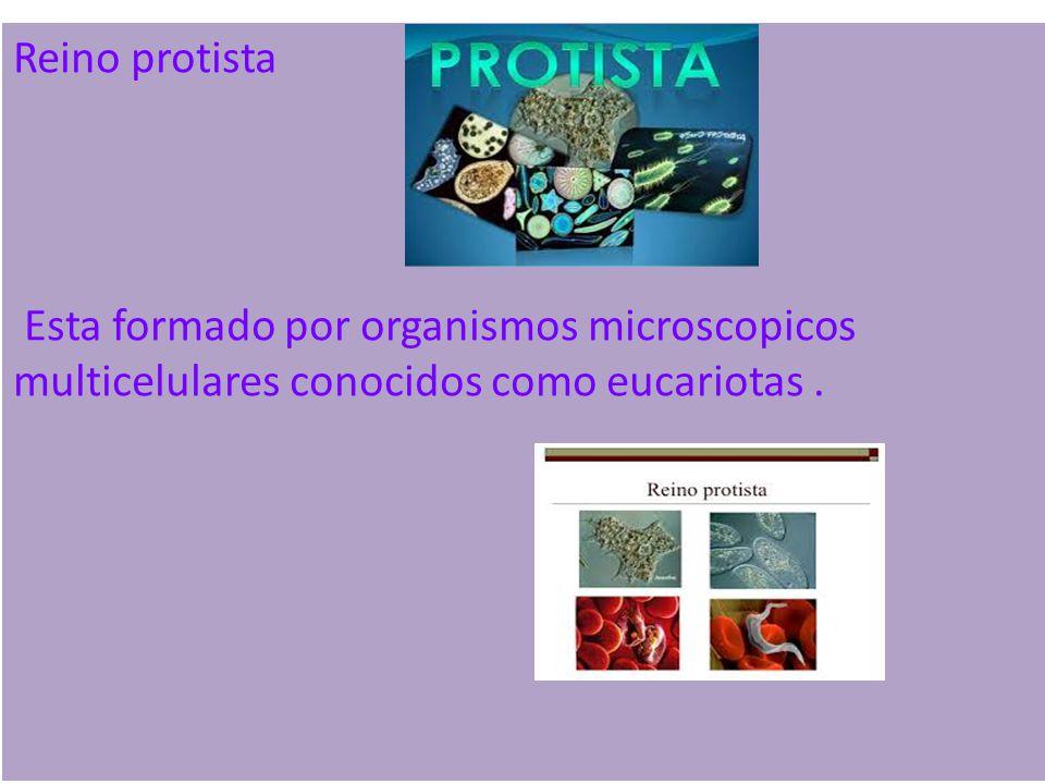 Reino protista Esta formado por organismos microscopicos multicelulares conocidos como eucariotas .