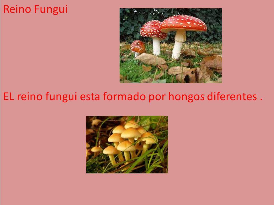Reino Fungui EL reino fungui esta formado por hongos diferentes .