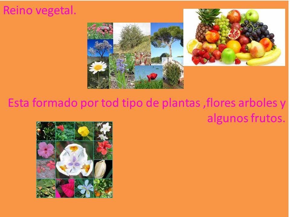 Reino vegetal. Esta formado por tod tipo de plantas ,flores arboles y algunos frutos.