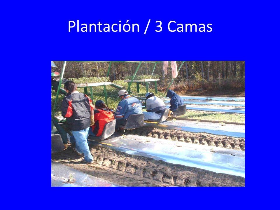 Plantación / 3 Camas