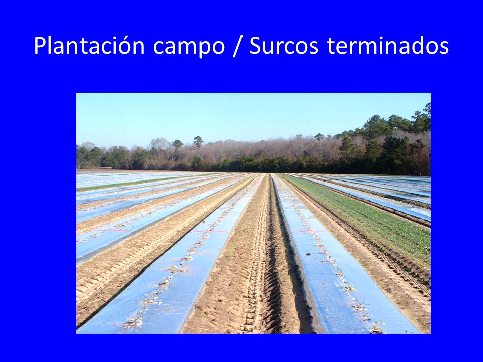 Plantación campo / Surcos terminados