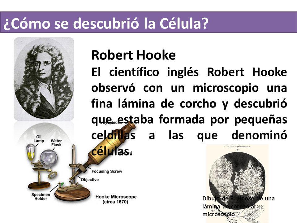 ¿Cómo se descubrió la Célula