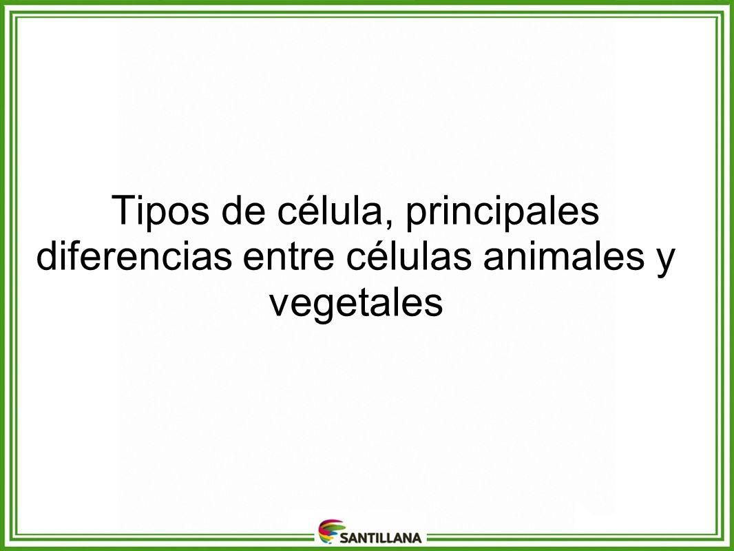 Tipos de célula, principales diferencias entre células animales y vegetales