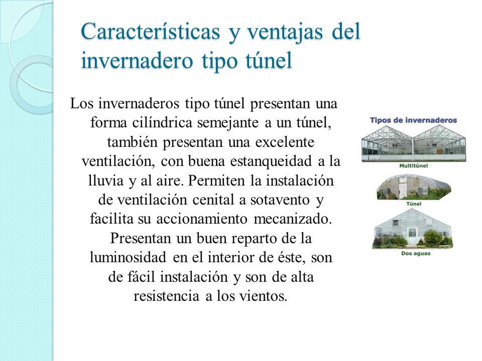 Características y ventajas del invernadero tipo túnel