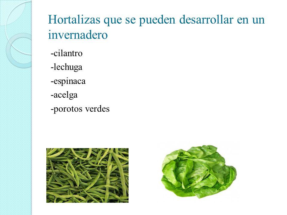 Hortalizas que se pueden desarrollar en un invernadero