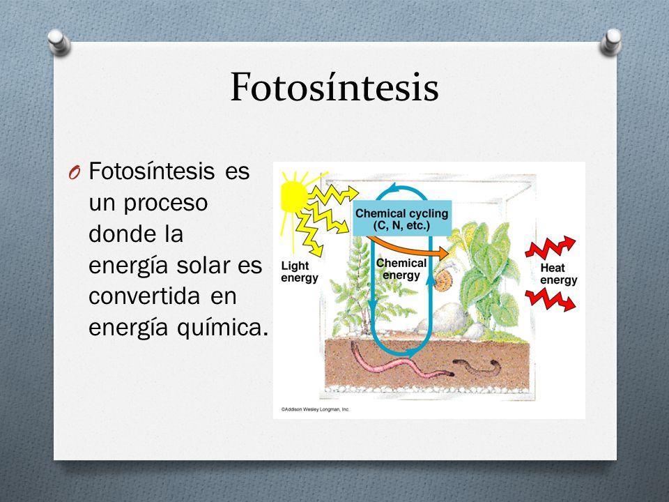 Fotosíntesis Fotosíntesis es un proceso donde la energía solar es convertida en energía química.