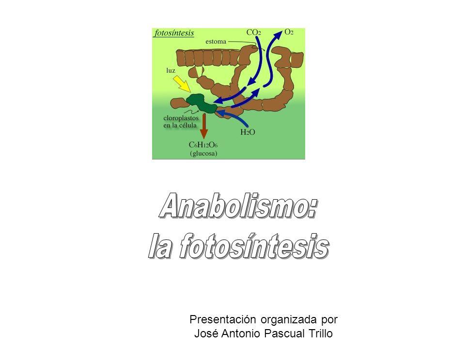 Anabolismo: la fotosíntesis Presentación organizada por