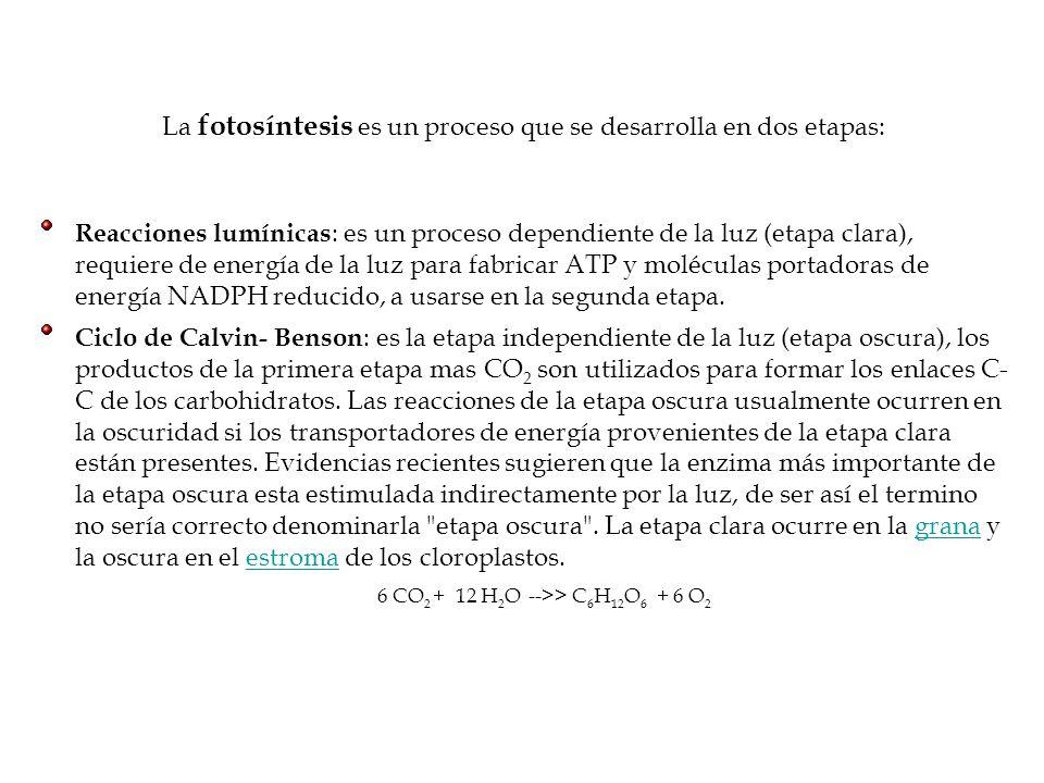 6 CO2 + 12 H2O -->> C6H12O6 + 6 O2