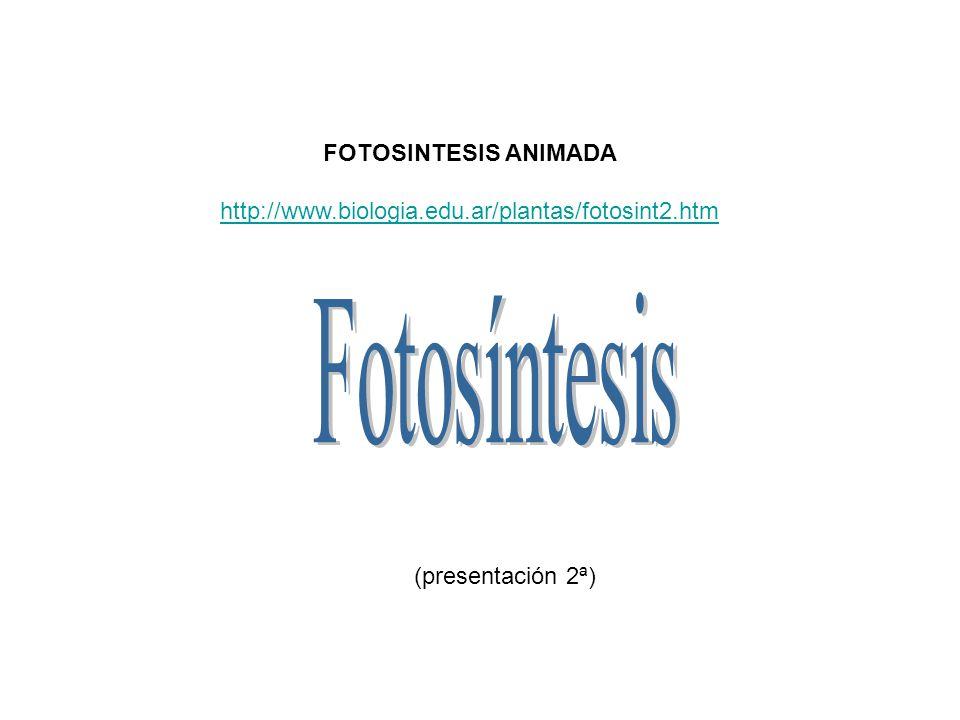 Fotosíntesis FOTOSINTESIS ANIMADA