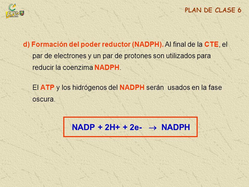 El ATP y los hidrógenos del NADPH serán usados en la fase oscura.