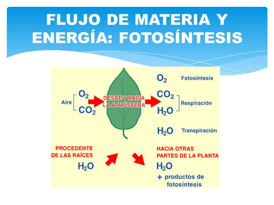 FLUJO DE MATERIA Y ENERGÍA: FOTOSÍNTESIS