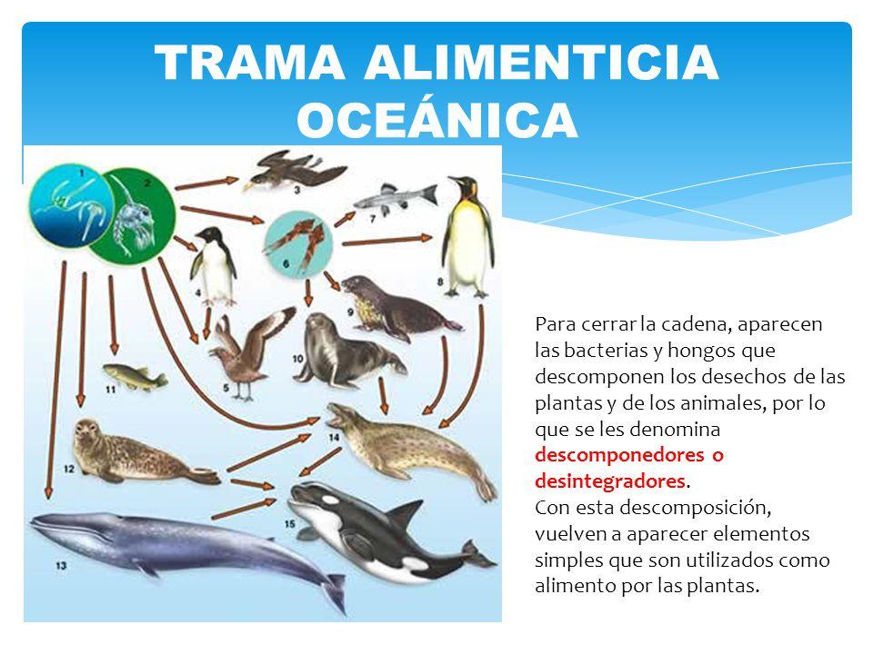 TRAMA ALIMENTICIA OCEÁNICA