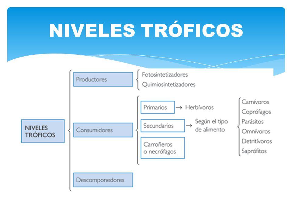 NIVELES TRÓFICOS