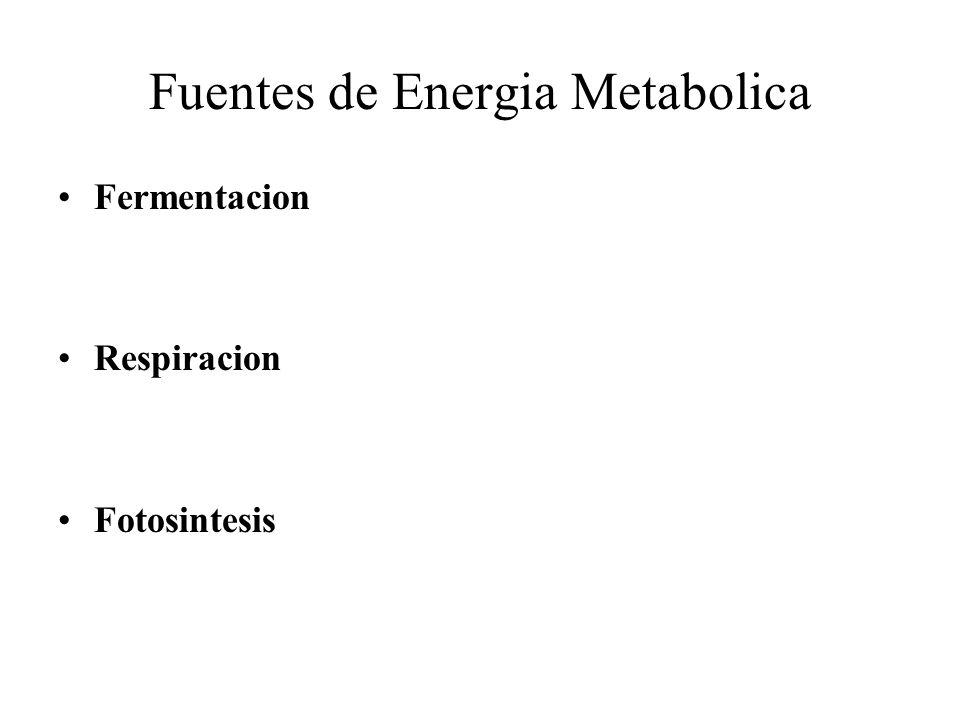 Fuentes de Energia Metabolica